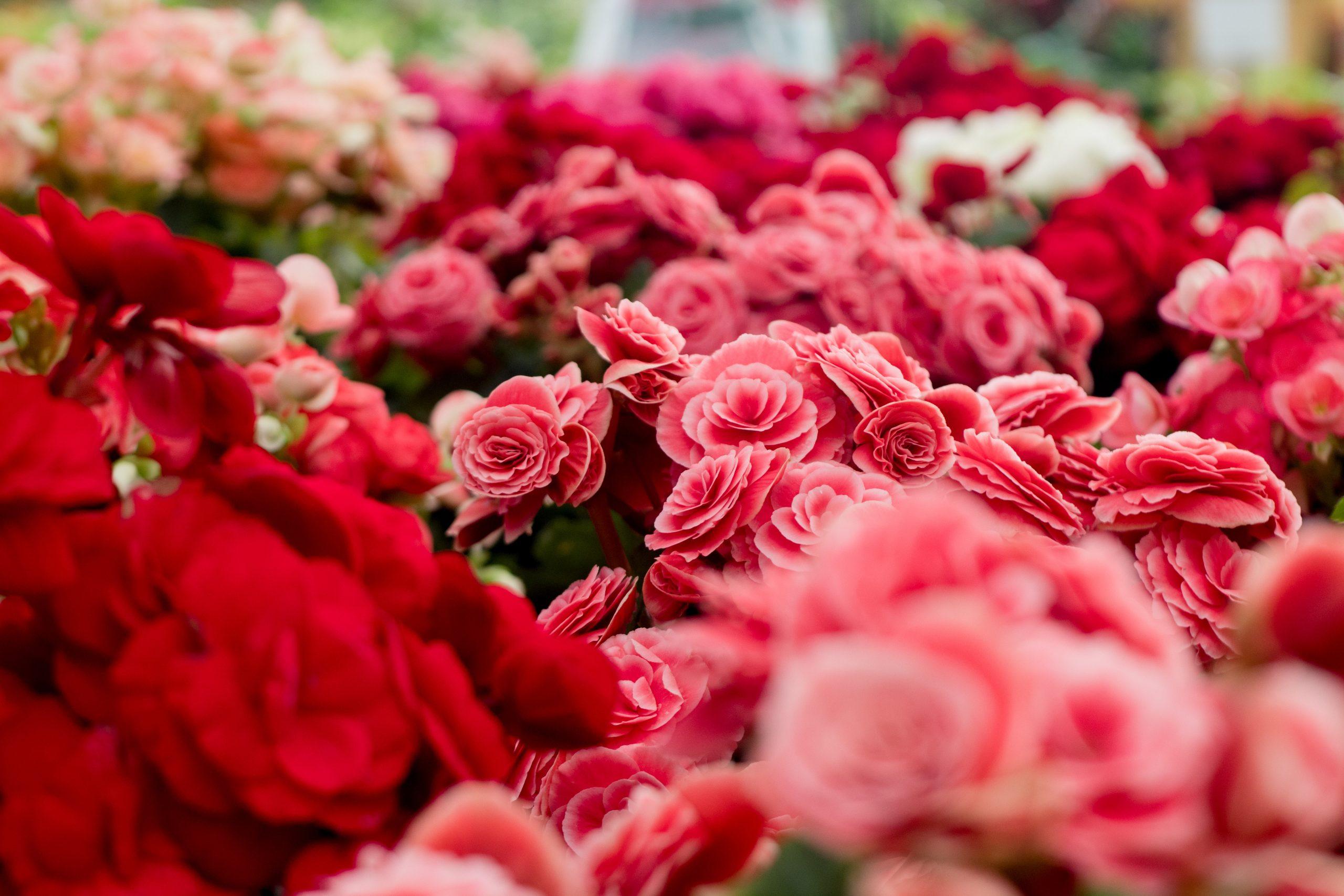Lo que nadie te cuenta para tener tus flores frescas por más tiempo
