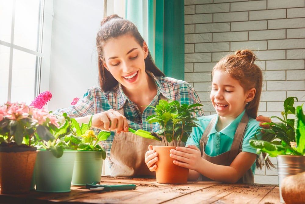 Cómo cuidar las flores durante el verano