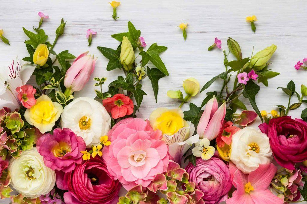 Te contamos el significado del color de las flores
